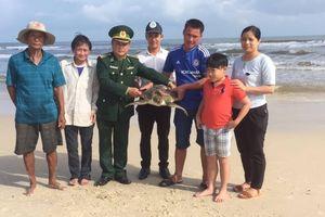 Quảng Trị: Thả cá thể vích nặng 14 kg về môi trường tự nhiên