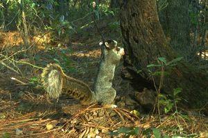Mạng xã hội Mỹ 'phát sốt' với chú sóc khổng lồ