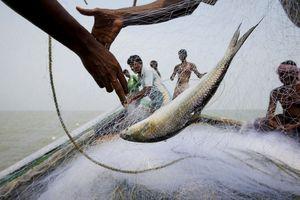 Cuộc sống trên hòn đảo đang chìm dần của Ấn Độ