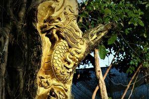 Dát vàng lá lên thân cây, nghệ nhân Cần Thơ gây kinh ngạc