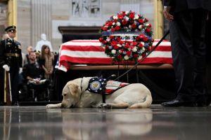 Chú chó Sully tiễn biệt cố tổng thống Bush 'cha' lần cuối