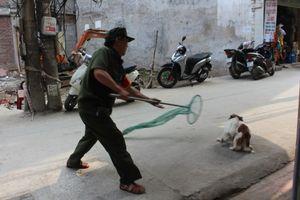 Hà Nội: Thí điểm đội săn bắt chó thả rông