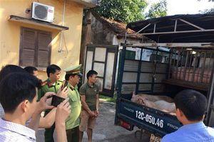Lạng Sơn: Ráo riết ngăn chặn buôn lậu lợn không rõ nguồn gốc