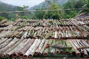 Quảng Nam: Phát triển cây quế giúp đồng bào Mơ nông tăng thu nhập