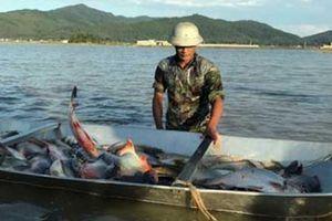 Nửa năm nuôi cá, nửa năm trồng lúa, ruộng hoang biến thành 'vàng'