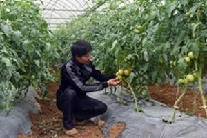 Nâng cao vị thế, vai trò của nông dân trong nông nghiệp hiện đại