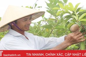 Năm 2019, Thạch Hà phấn đấu giá trị sản xuất nông, lâm, thủy sản đạt 2.580 tỷ đồng
