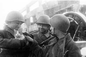 Mèo và lạc đà - những 'chiến binh' đã giúp người lính Liên Xô thắng Thế chiến II như thế nào?