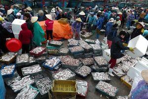 Bàn giải pháp bảo vệ, phát triển nguồn lợi thủy sản