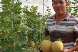 Địa chỉ xanh- Nông sản sạch: 'Đột nhập' vào vườn dưa lưới công nghệ cao độc nhất ở Vĩnh Long