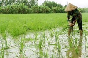 Cà Mau: Giảm nghèo nhanh ở vùng dân tộc thiểu số