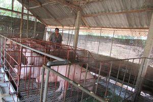 Hiệu quả từ dạy nghề cho lao động nông thôn