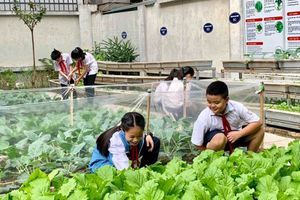 Vườn rau sạch của học sinh trường Tiểu học Chu Văn An (Tây Hồ, Hà Nội)