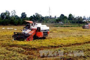 Cần Thơ nâng cao giá trị nông sản và lợi nhuận cho nông dân
