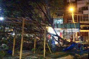 TP HCM: Hai bé gái thoát nạn khi cảnh cây to rơi trúng người