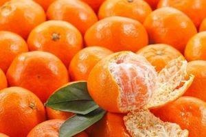5 điểm phân biệt cam canh ta và cam Trung Quốc