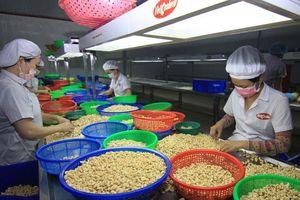 Xuất khẩu nông sản sang EU: Cơ hội song hành cùng thách thức