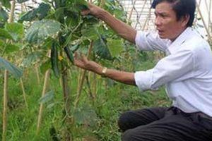 Chi hội trưởng 'kéo' cả thôn làm rau sạch