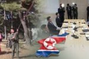 Hàn Quốc và Triều Tiên triển khai hợp tác về lâm nghiệp và y tế