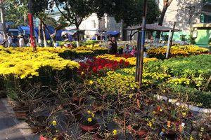 TPHCM: Tiêu thụ khoảng 1 triệu chậu hoa trong dịp Tết Nguyên đán