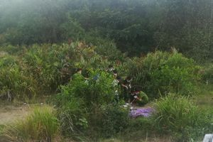 Phát hiện thi thể khô ở bãi đất trống nghi bị sát hại