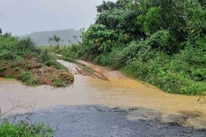 Quảng Bình: Trại bò Hòa Phát lợi dụng trời mưa xả thải 'bức tử' môi trường