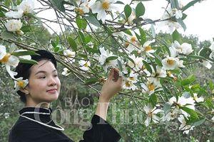 Hoa sở nở trắng miền biên Quảng Ninh