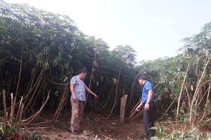 Lào Cai: 16 năm sau GPMB, chính quyền vẫn 'quên' trả đất thừa cho dân (!?)