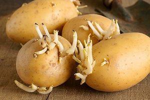 Điểm mặt những loại thực phẩm dễ gây ngộ độc nhất trong dịp tết