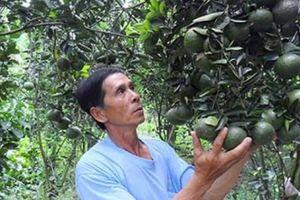Biến khó khăn, thách thức thành những mùa quả ngọt