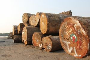 Hải quan Hải Phòng: Truy thu hàng chục tỷ đồng từ mặt hàng gỗ nhập khẩu
