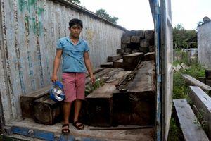 Vận chuyển gần 45m3 gỗ giổi, hai thanh niên nhận 54 tháng tù