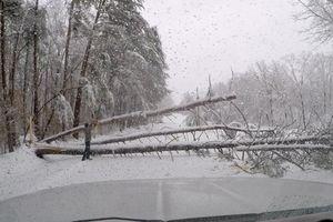 Tuyết rơi dày ở Đông Nam nước Mỹ: 3 người chết, hơn 100 ngàn khách hàng mất điện
