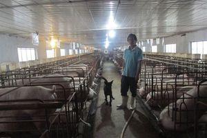 Lãi 2 tỷ đồng/năm nhờ tự tìm tòi chế biến thức ăn, nuôi lợn khép kín