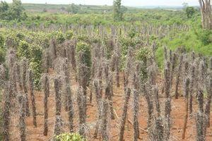 Xót xa thủ phủ 'vàng đen': Phải có biện pháp, chế tài nông dân