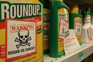 Tin mới vụ kiện Monsanto: Bayer bán tài sản, cắt 12.000 việc làm
