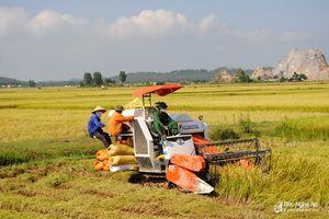 HĐND tỉnh giải quyết khâu yếu, nâng cao giá trị trong sản xuất nông nghiệp