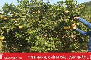 Can Lộc sẵn sàng 10 gian hàng cho Lễ hội Cam và các sản phẩm nông nghiệp