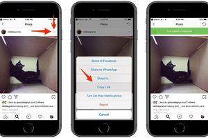 6 bước để tải về một tấm ảnh với độ phân giải tối đa từ Instagram
