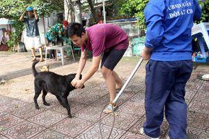 43 trường hợp thả rông chó ở trung tâm TP.HCM bị xử phạt