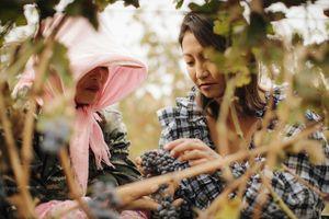 Lexus và Condé Nast International hợp tác trong series phim ngắn 'Hành trình trải nghiệm Hương vị'
