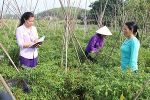 Huyện Phú Bình - Thái Nguyên: Xây dựng cánh đồng lúa mẫu lớn theo sản xuất hướng hữu cơ