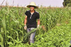 Tiến sĩ, thạc sĩ Trung Quốc 'rủ nhau' rời thành thị về nông thôn làm nông
