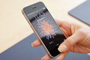 Khai tử iPhone SE là quyết định sai lầm của Apple