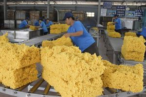 Việt Nam chi tỷ USD nhập cao su: Có là nghịch lý?