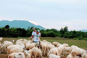 Bạn trẻ về Suối Nghệ 'chăn cừu' tìm khoảng lặng