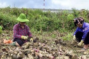 Doanh nghiệp Việt giúp tạo việc làm cho dân vùng sâu vùng xa của Lào