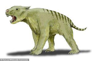 Lần đầu tiên phát hiện hóa thạch hoàn chỉnh của loài sư tử 'có túi' ở Australia