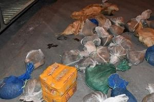 Ninh Bình: Tạm giữ xe khách vận chuyển 36 cá thể tê tê