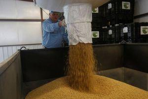 Trung Quốc vừa mua hơn 1 triệu tấn đậu tương Mỹ